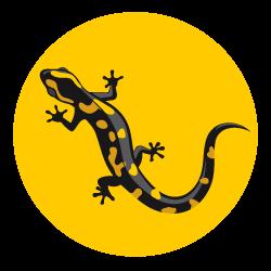 Feuersalamander Hessen Logo
